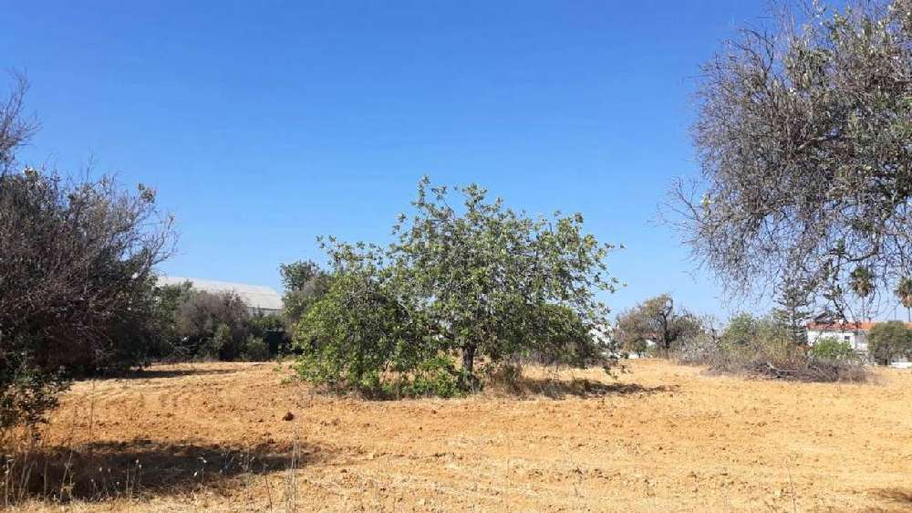 Mexilhoeira da Carregação Lagoa (Algarve) terrain picture 148124