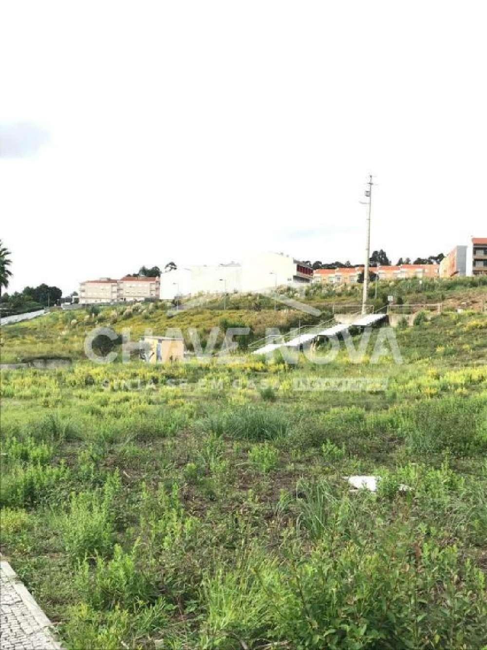 Arrifana Santa Maria Da Feira terrain picture 152105