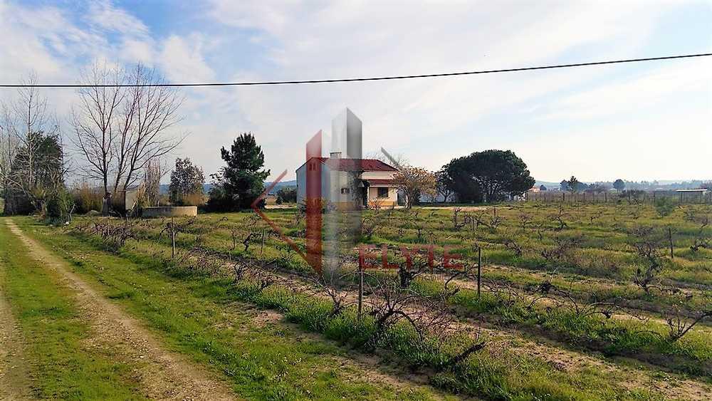 Casal da Mariana Santarém estate picture 153687