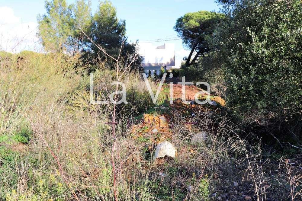 Cascais Cascais terrain picture 151661