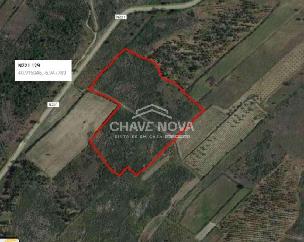 Castelo Rodrigo Figueira De Castelo Rodrigo terreno foto #request.properties.id#