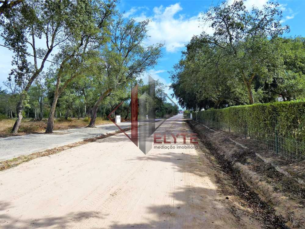 Casal da Cruz Santarém terrain picture 153684