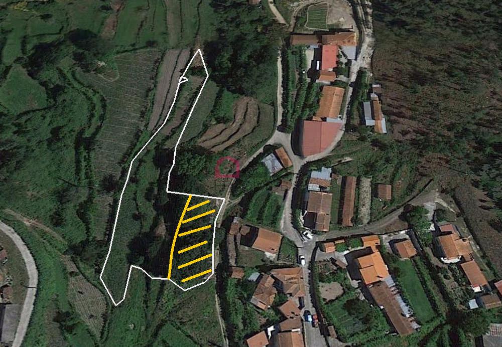 Viseu Viseu terrain picture 153585