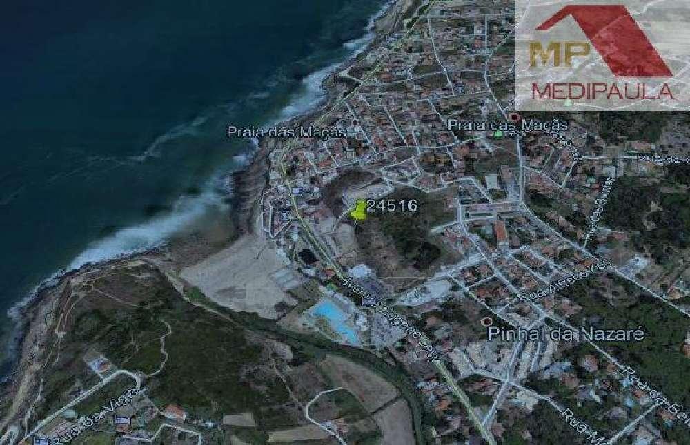 Colares Sintra terrain picture 153121