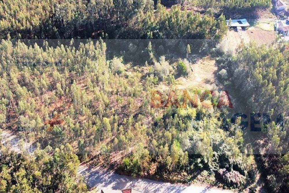 Gândara Oliveira De Azeméis terrain photo 151060