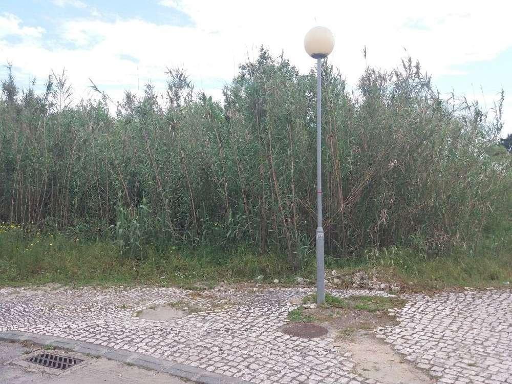 Azeitão Setúbal terrain picture 155222