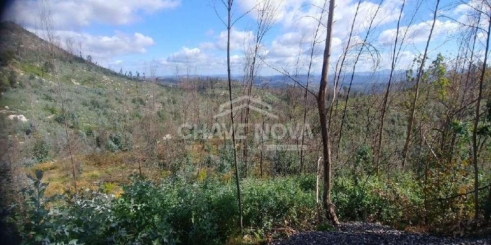 Várzea da Serra Tarouca terrain picture 155644