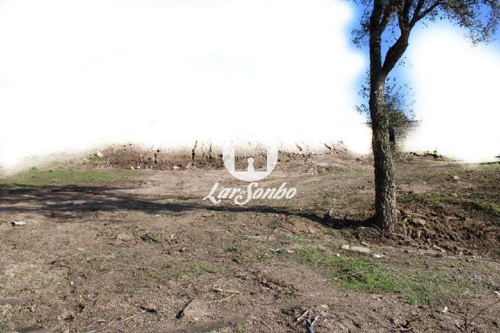 Cossourado Barcelos terrain photo 155586