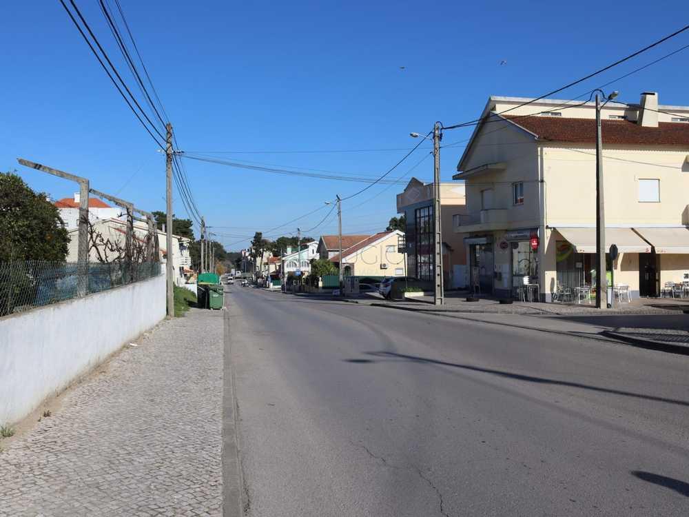 Azeitão Setúbal terrain picture 116575