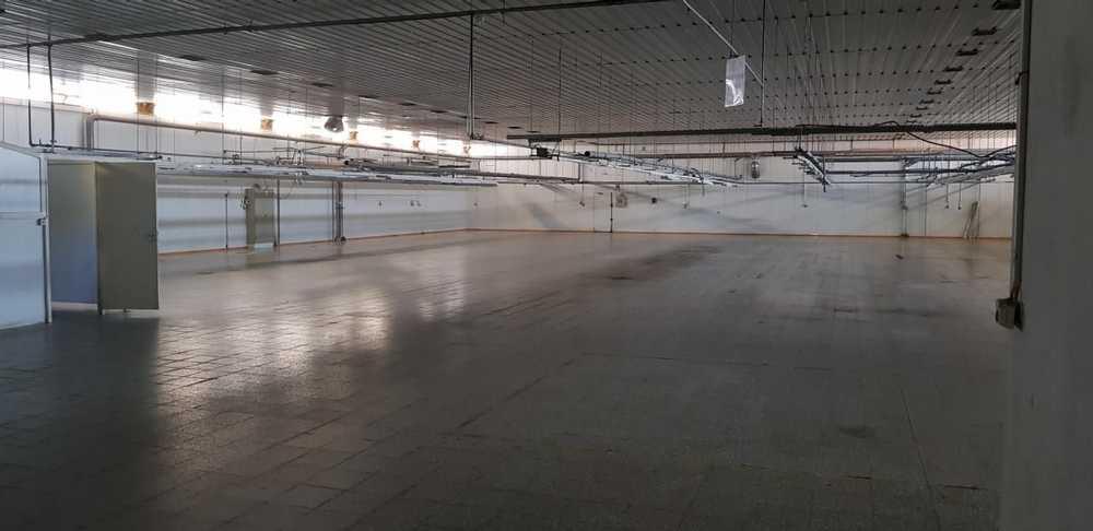 Malbusca de Cima Vila Do Porto commercial picture 116338