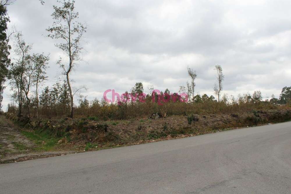 Guisande Santa Maria Da Feira terrain picture 127405