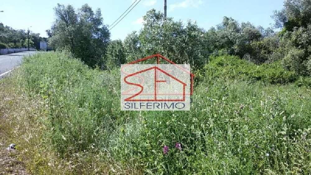Almargem do Bispo Sintra terrain picture 124672