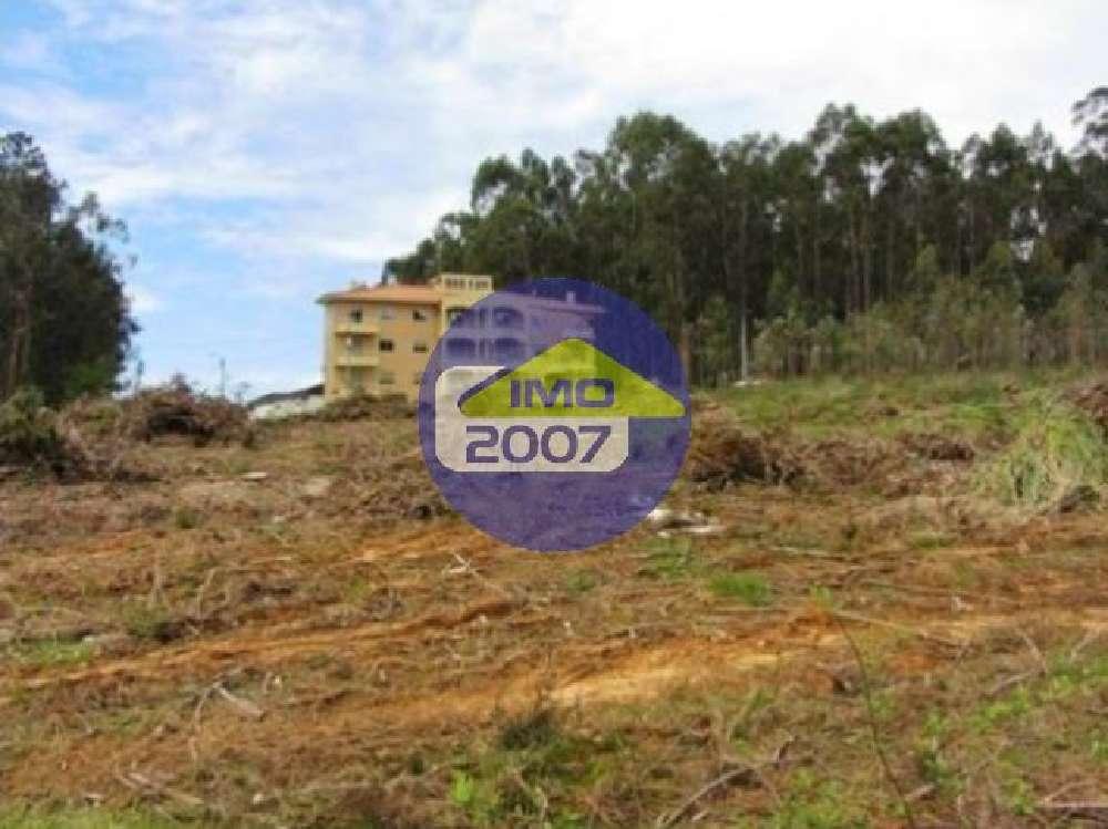 Gândara Oliveira De Azeméis terrain picture 126817