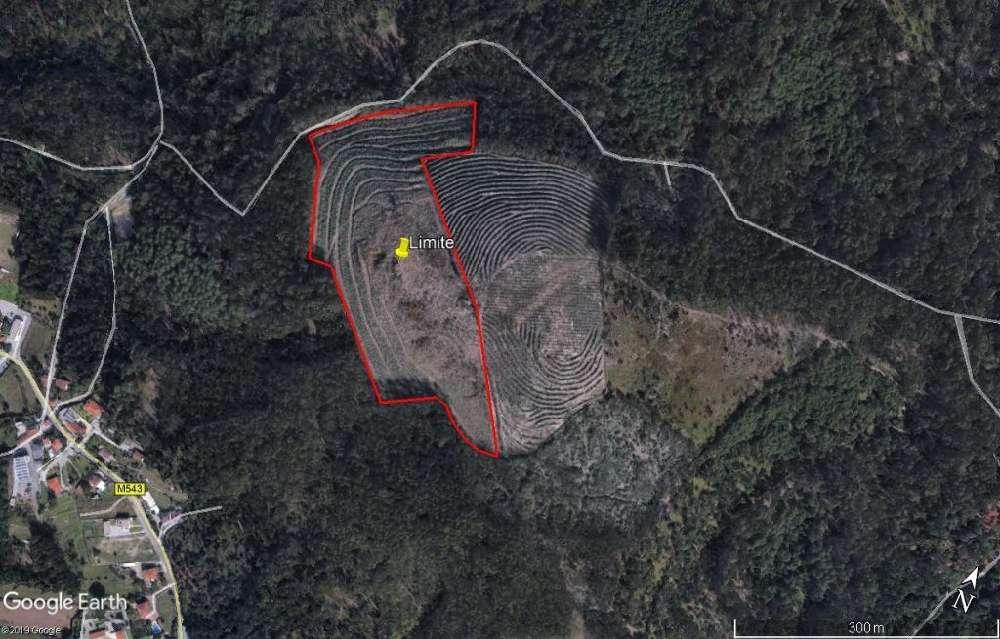Tamel Barcelos terrain picture 117319