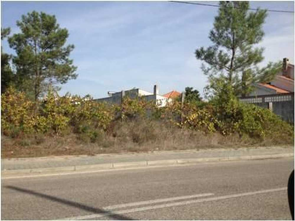 Vale de Santarém Santarém terrain picture 116816