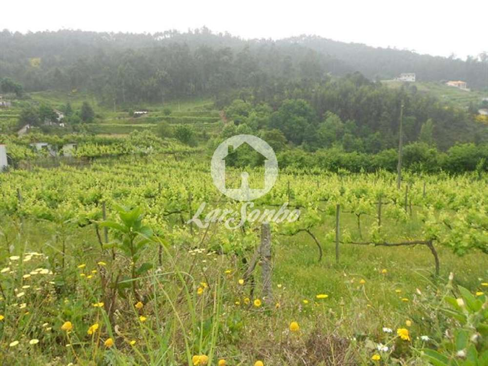 Mancelos Amarante terrain picture 118673