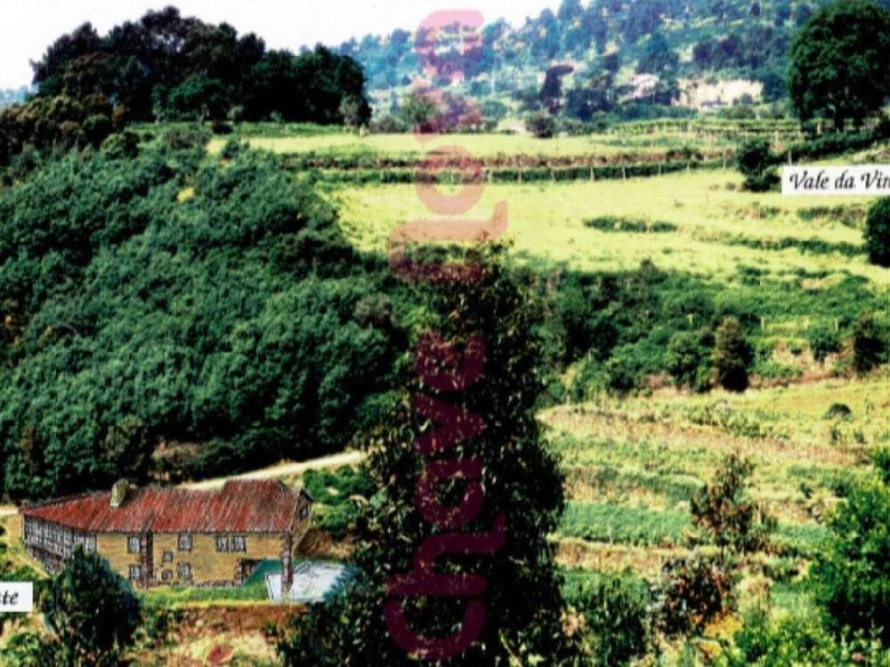 Loivos da Ribeira Baião terrain photo 127401