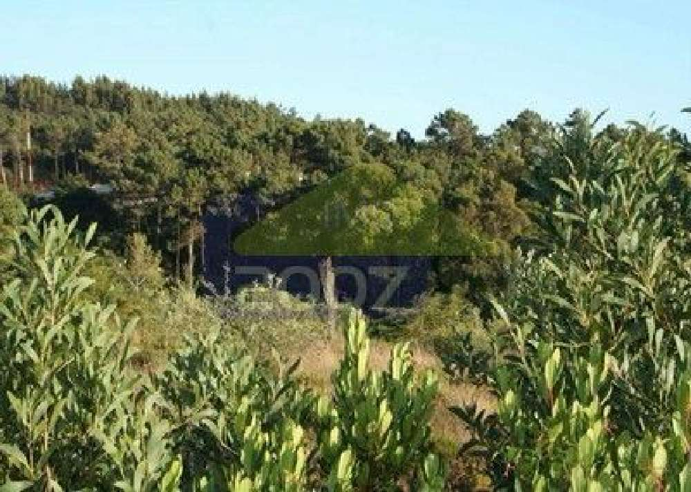 Belas Sintra terrain photo 128450