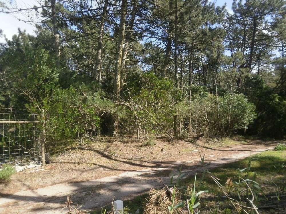 Colares Sintra terrain picture 128180