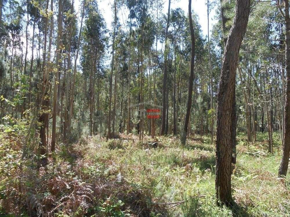 Perulhal Batalha terreno foto #request.properties.id#