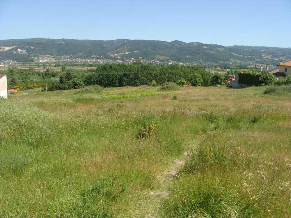 Cruz Vila Real terrain picture 137754