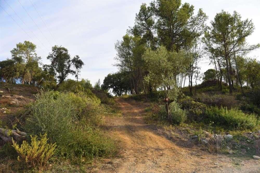Pontével Cartaxo terrain picture 132208