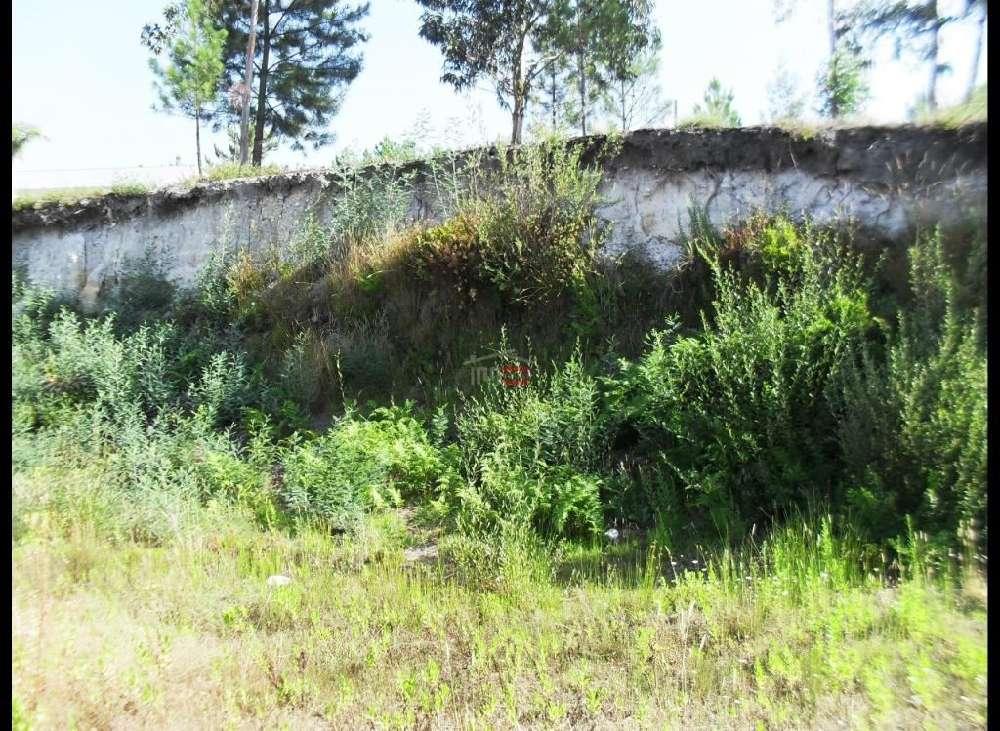 Caxarias Ourém terrain picture 136852