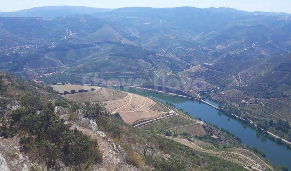 Canelas Peso Da Régua terrain picture 133275