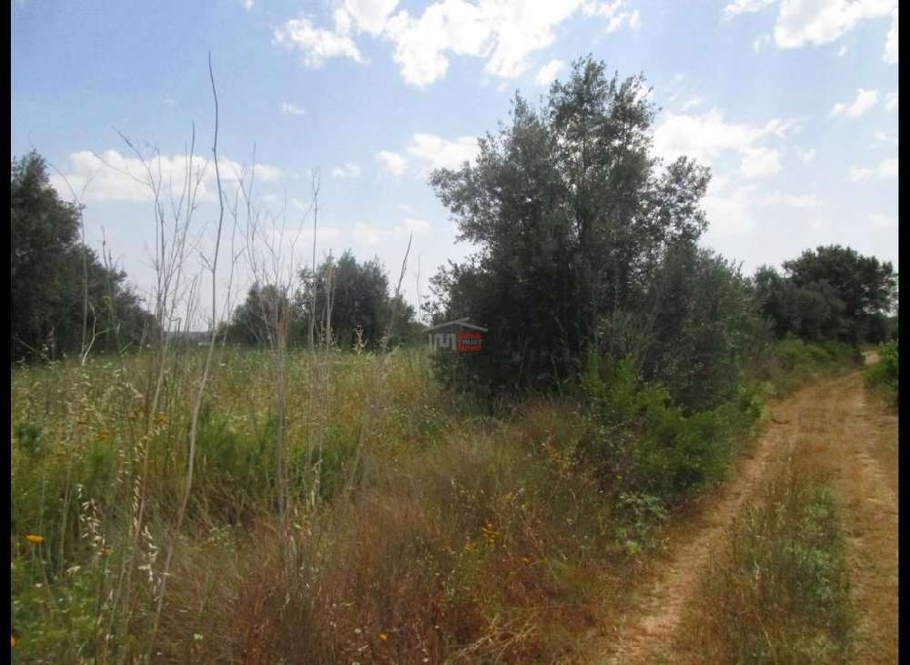 Paialvo Tomar terrain picture 137012
