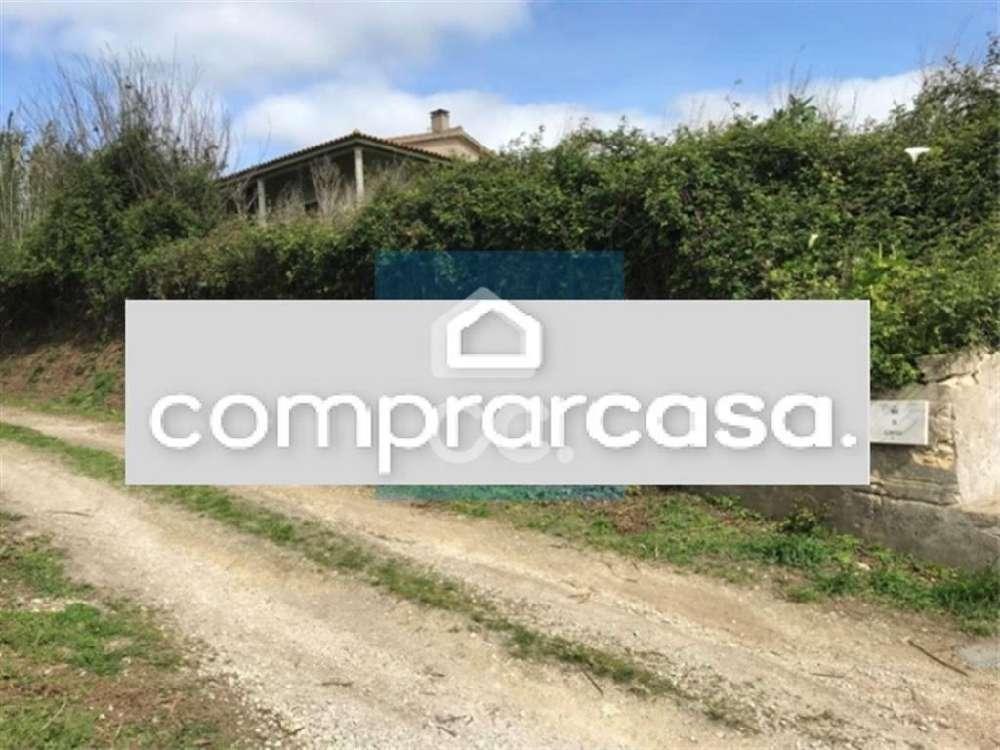 Benedita Alcobaça terrain picture 133950