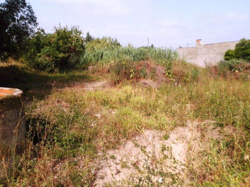 Ribeira Coimbra terreno foto #request.properties.id#
