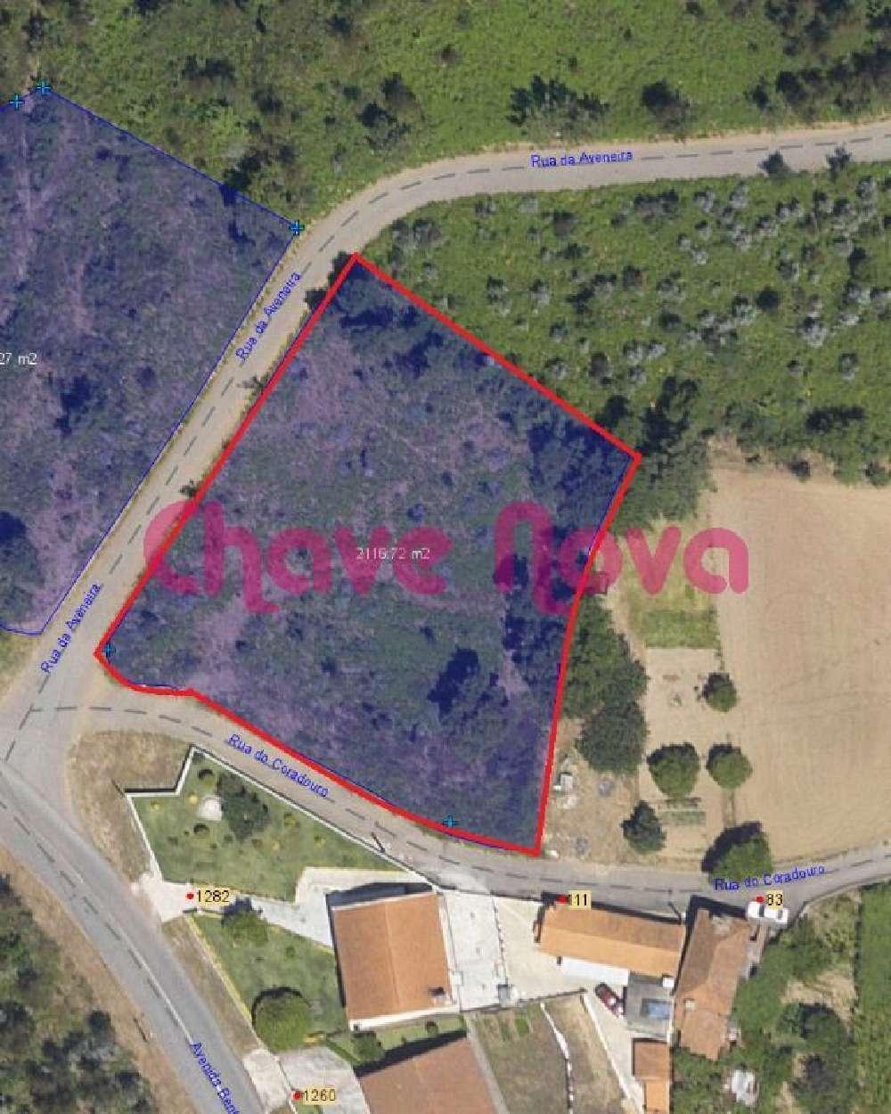 Pinheiro Oliveira De Azeméis terrain picture 139066