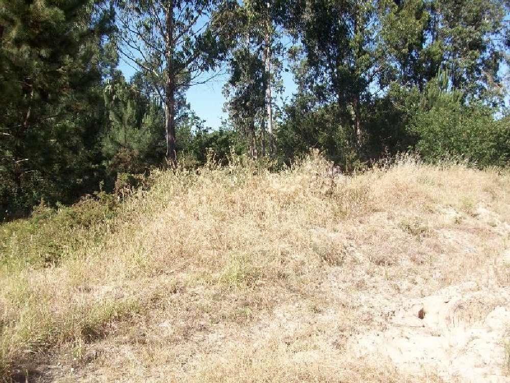 Árvore Vila Do Conde terrain picture 138704