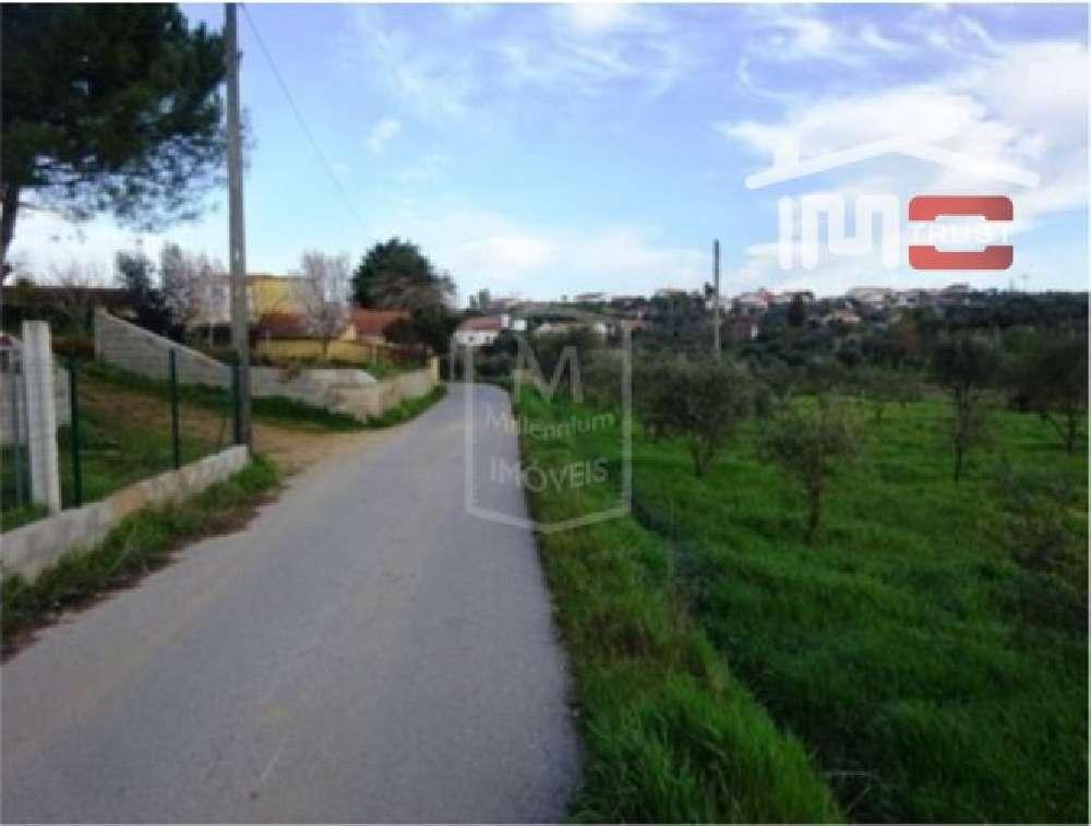 Junceira Tomar terrain picture 139867