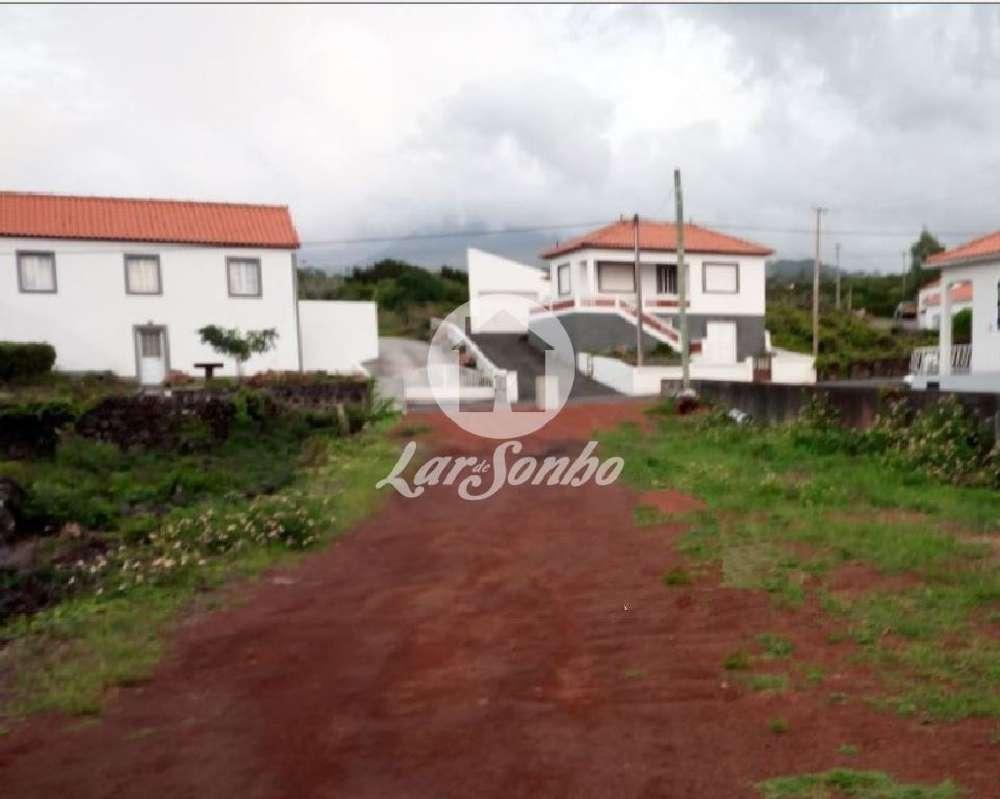 Criação Velha Madalena house picture 138746