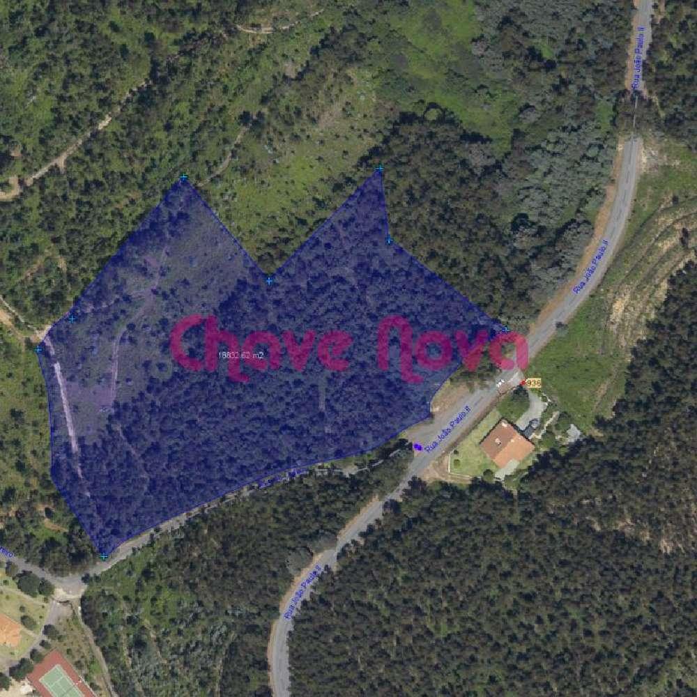 Pinheiro Oliveira De Azeméis terrain picture 139075
