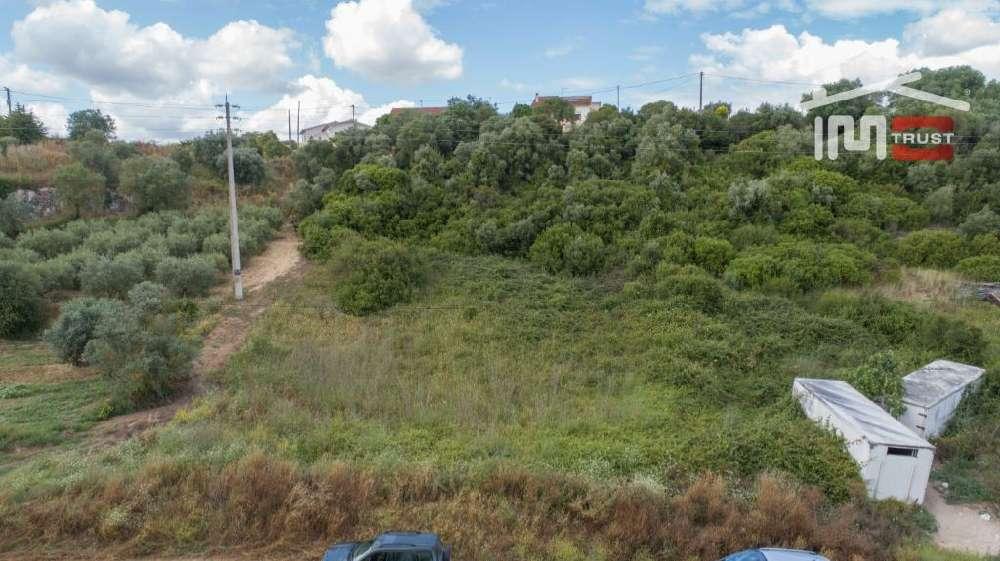Almoster Santarém terrain picture 145069