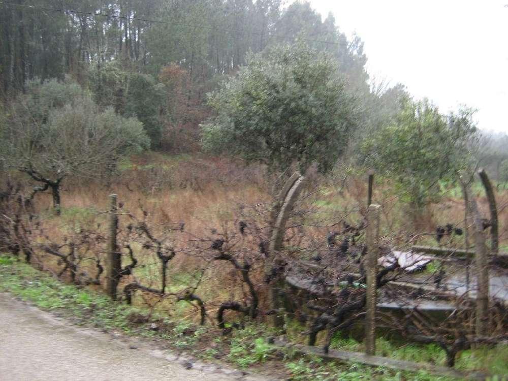Cabeçudo Sertã terrain picture 145131