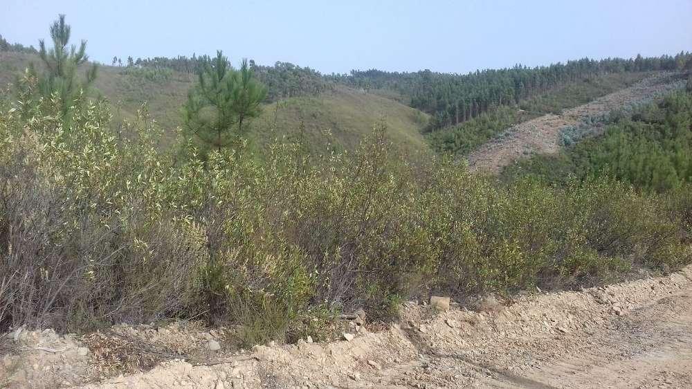 Cumeada Loulé terrain picture 145173