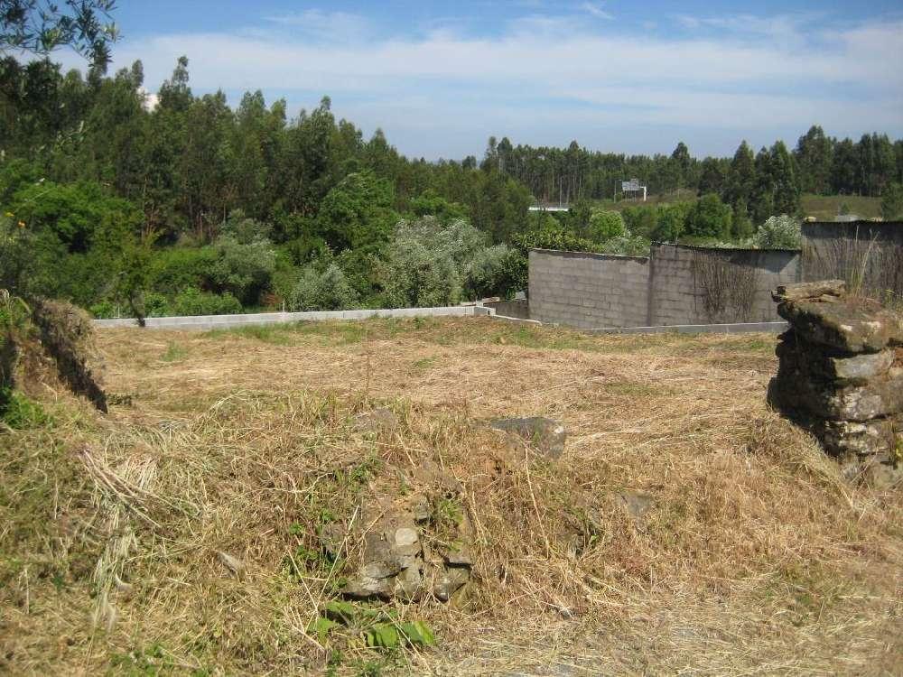 Cabeçudo Sertã terrain picture 145121