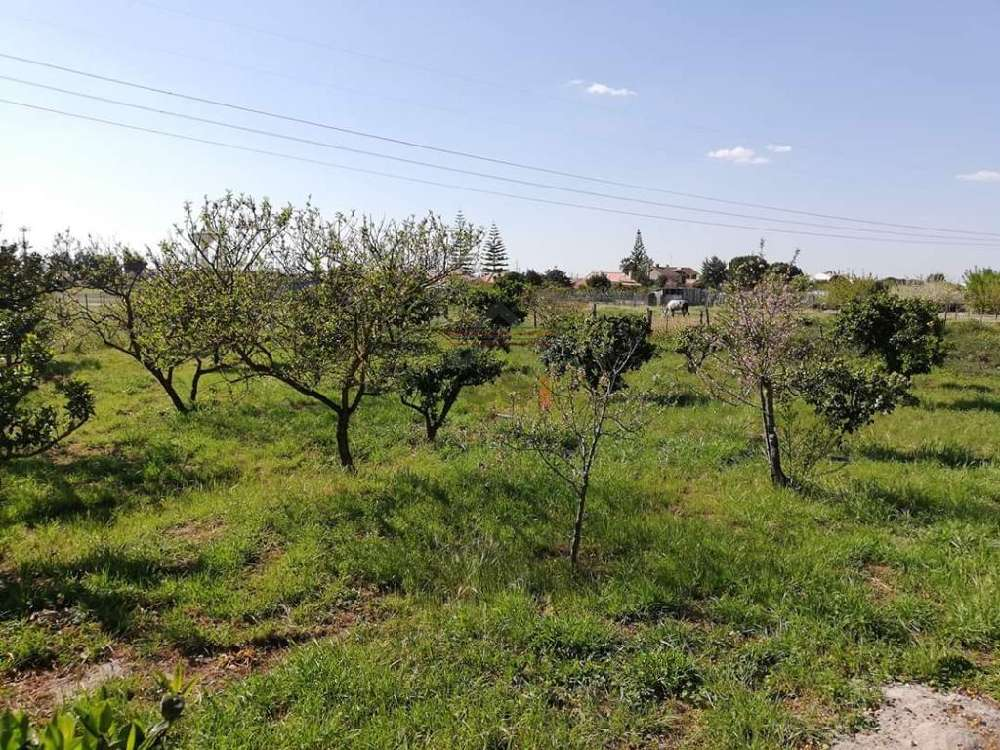 Samora Correia Benavente terrain picture 144237