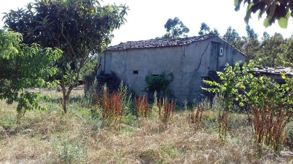 Castelo Sertã house picture 145172