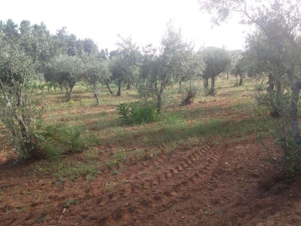Jardim Loulé terrain picture 145187