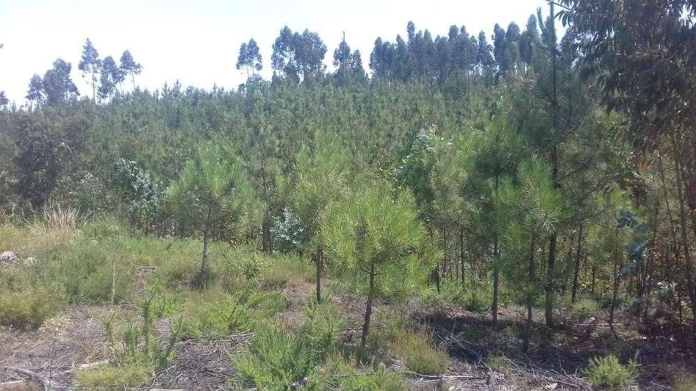 Jardim Loulé terrain picture 145175