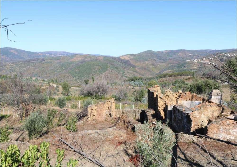 Madeirã Oleiros terrain picture 145149