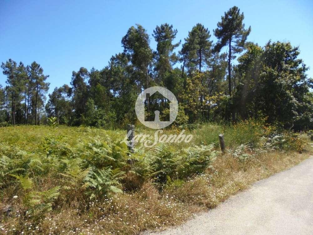 Barbudo Vila Verde terrain picture 144339