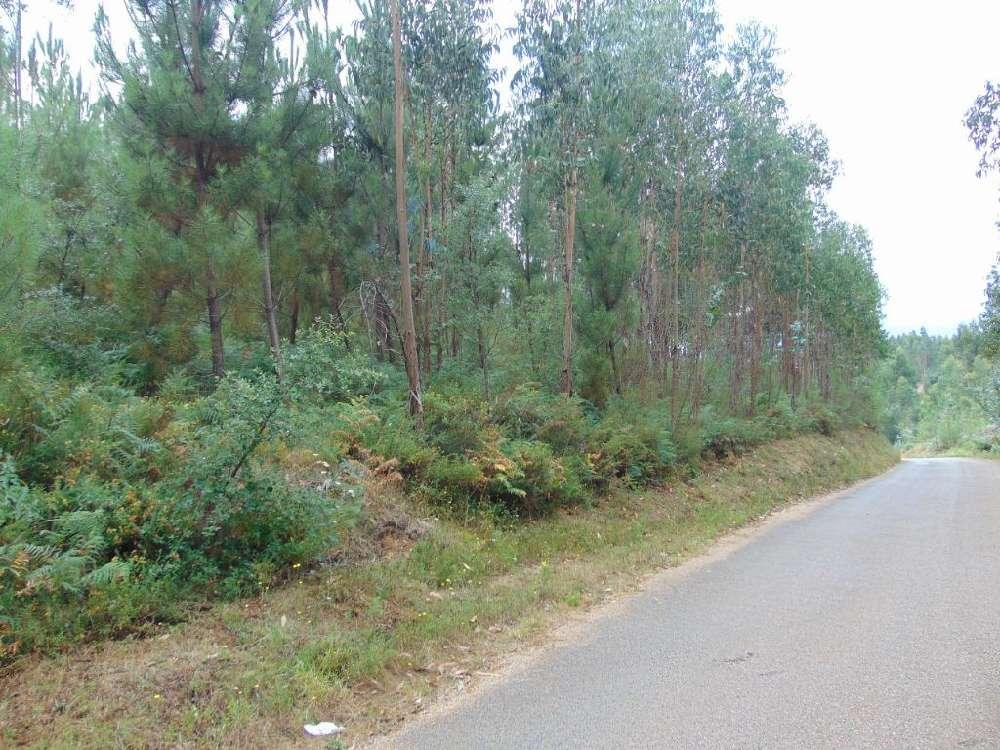 Sertã Sertã terrain picture 145189