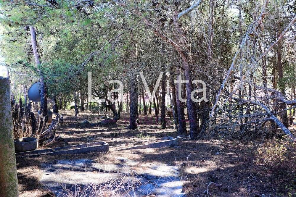 Alcabideche Cascais terrain picture 146374