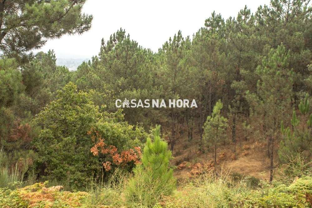 Penha Longa Marco De Canaveses terrain picture 146510