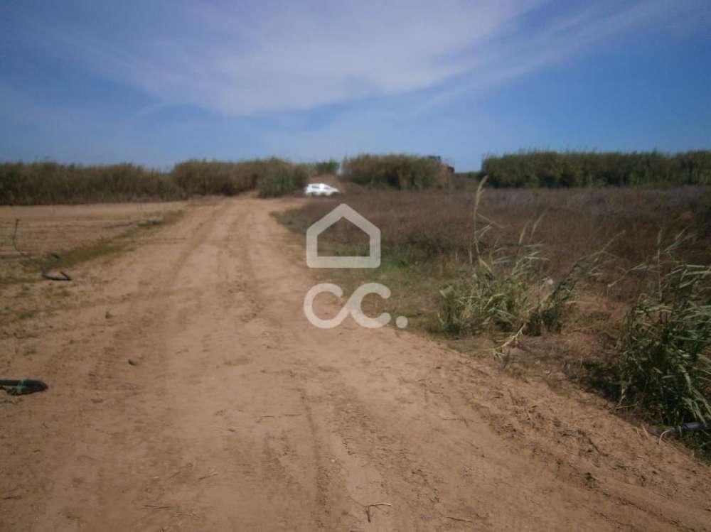 Atouguia da Baleia Peniche terrain picture 146984